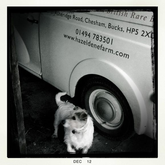 A little dog next to Hazeldene's old Morris Minor van.